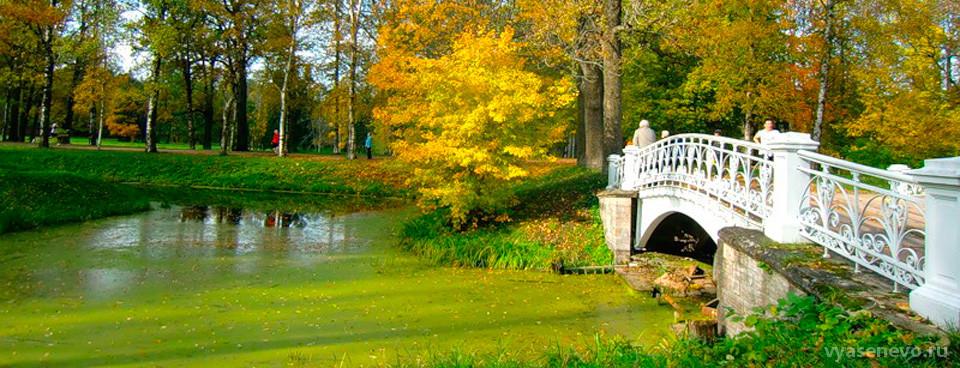 Осенний сезон экскурсий в Битцевском лесопарке