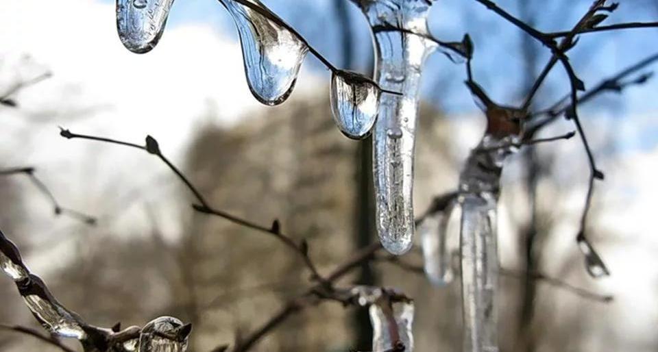 За всю историю метеонаблюдений за погодой в столице февраль 2019 г. оказался одним из самых теплых