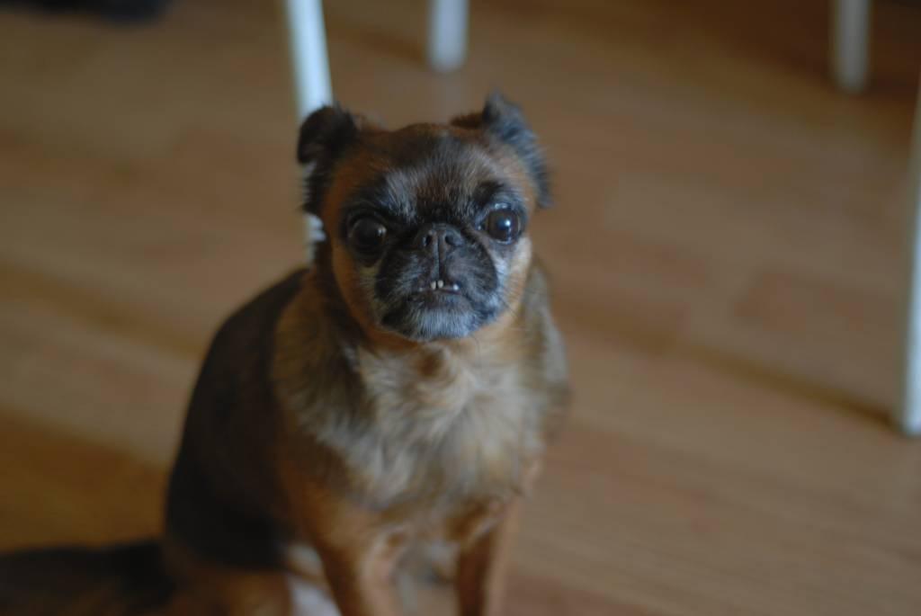 Бесплатная вакцинация против бешенства домашних животных в Ясеневе пройдет 21 апреля