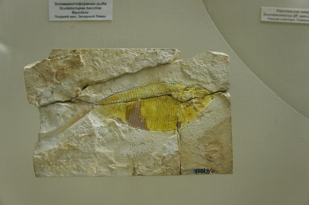 В Палеонтологическом музее, в зале кайнозоя, появился новый экспонат
