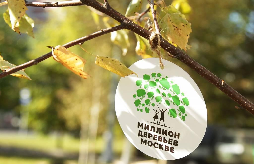 В Ясеневе подвели итоги акции «Миллион деревьев-2019»