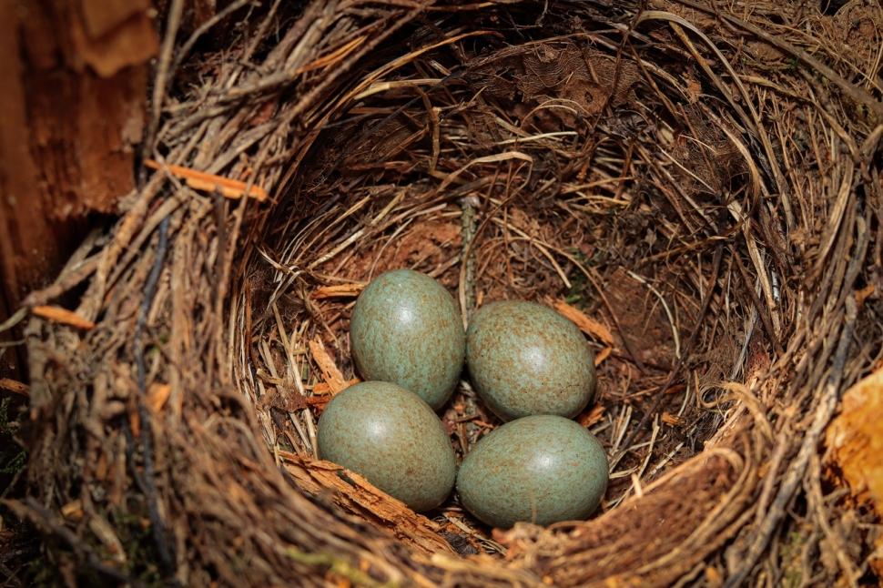 Сотрудники Мосприроды обнаружили гнезда с птенцами серых ворон в районе Ясенево