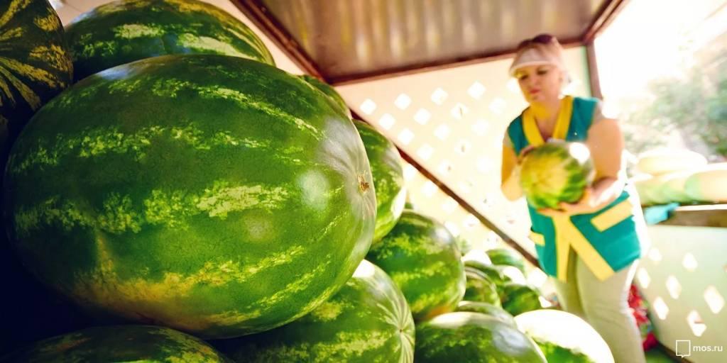 С 1 августа по 1 октября 2020 года в Москве открыт сезон продажи бахчевых культур на 240 бахчевых развалах
